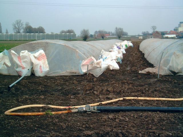 أسس إنتاج الخضر في البيوت plastiek_prei_klein-2005.03.24-14.18.37.jpg