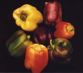 [img width=269 height=235]http://home.scarlet.be/groenteninfo/images/alle_kleuren_van_paprikas.jpg[/img]