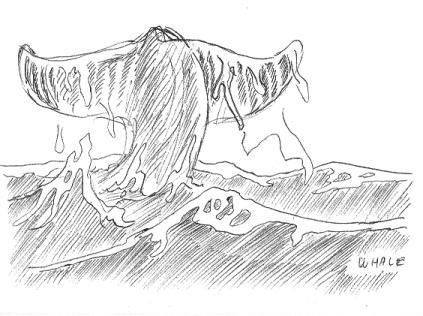 Inktober-Whale.jpg