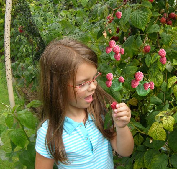 In de fruittuin is het mooie aan het nuttige gekoppeld